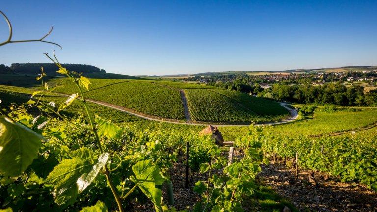Албер Бишо – поколения традиция в чаша вино