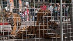 На купон в мола с тигри и камила
