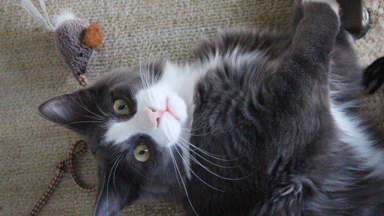 8 начина да направим котката щастлива