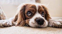 Ако кученцето ви е женско, кастрацията по всяка вероятно ще удължи живота му. Премахването на матката и яйчниците при женските кучета елиминира риска от отключване на рак на половите органи, както и на потенциално смъртоносни проблеми като пиометра (гнойно възпаление на матката).