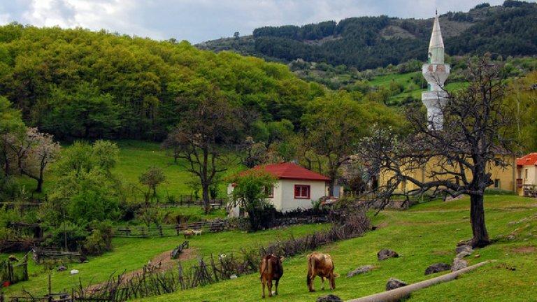 Крави и овце необезпокоявани пасат по ливадите край селото