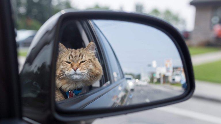 С котка в колата: може и да не е драматично