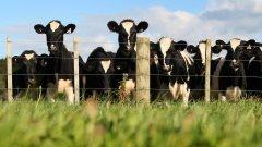 Оцеляването на дребните производители ще покаже дали тя изобщо е ефективна