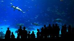 Georgia в Атланта е най-големият аквариум в света. На снимките следват аквариумите Дубай, Aqua Dom в Берлин, Чурауми в Окинава и Two Oceans в Кейптаун
