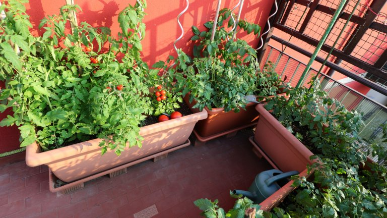 """И няколко неща, които е полезно да знаем    Основните и общи правила по пътя към зеленчуковата градина са, че повечето растения се засаждат през пролетта. Много от тях могат да бъдат засадени и през лятото. Някои обичат повече топлина и вода от други, затова има значение кога ще ги изнесете на балкона - информирайте се за всяко поотделно. Общото е, че докато са крехки и малки, искат много топлина и светлина.    Корените на повечето растения обичат да дишат, затова разравяйте почвата от време на време, а преди да ги засадите, на дъното на саксията сложете дренаж от камъчета и пясък. Задължително е саксията да има дупки отдолу и подложка, за да изтича ненужната вода и растението да """"пие"""", когато му е нужно. Това е подходящо и ако нямате възможност да поливате всеки ден."""