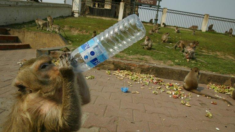 """""""Планетата на маймуните"""" е заглавието, с което местните в Лопбури могат да опишат ежедневието си"""