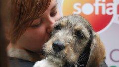 """8 кучета намериха нов дом с """"Подари си приятел"""""""