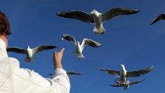 Птиците ще оцелеят в следващия четвърт век, защото се адаптират към човека