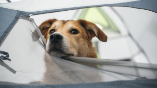 10 трика да отидете с куче на къмпинг и да ви е мирно на душата