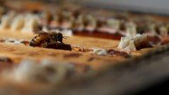 """Ако желаете да покажете на литовеца колко добър приятел сте, ще го зарадвате, като го наречете biciulis  - дума, приблизително съответстваща на """"другар"""", чийто корен произлиза от bite (пчела). В Литва пчелата е добър приятел, а добрият приятел е като пчела."""