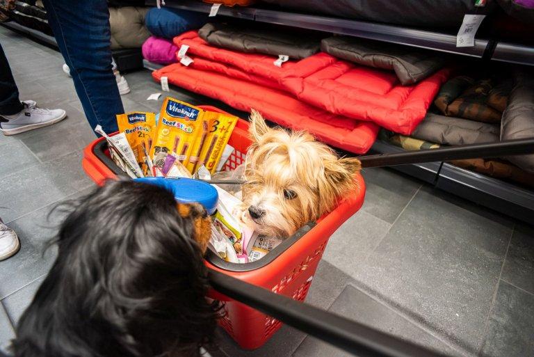 В Maxi Pet домашните любимци са звездите, които ще се насладят на преживяването и ще срещнат нови приятели