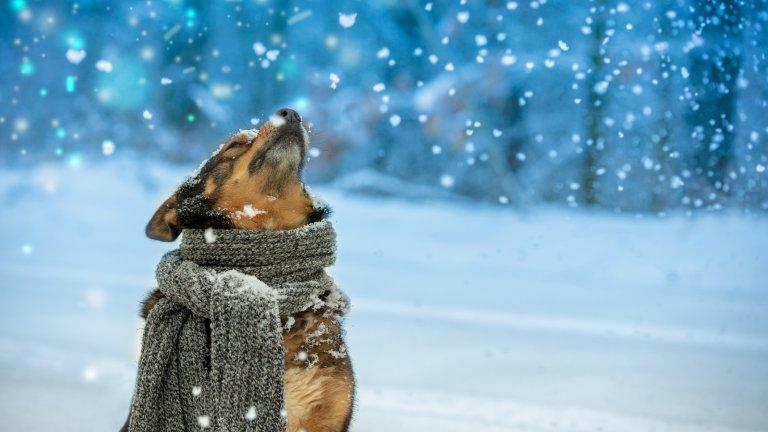 Мит номер 3: Кучетата не могат да се дехидратират, когато навън е студено  Масово стопаните смятат, че за кучетата е по-рисковано да останат без вода в жегите и че няма как животните да се обезводнят в студа. Това обаче не е вярно. През зимата времето често е сухо, а кучетата губят много от телесната си влага през дъха им. Затова им осигурявайте достатъчно вода преди и след разходка.