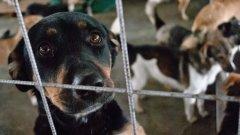 67-те животни са отглеждани в кошмарни условия - в малки клетки, сред изпражнения и в ужасна миризма