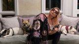 Певицата предлага награда от половин милион долара за спасяването на кучетата Густав и Коджи