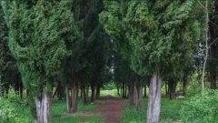 Зелените площи ще бъдат запазени, а собствениците на земята - обезщетени