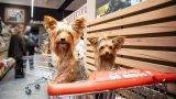 Maxi Pet скоро отваря врати за всички домашни любимци в София