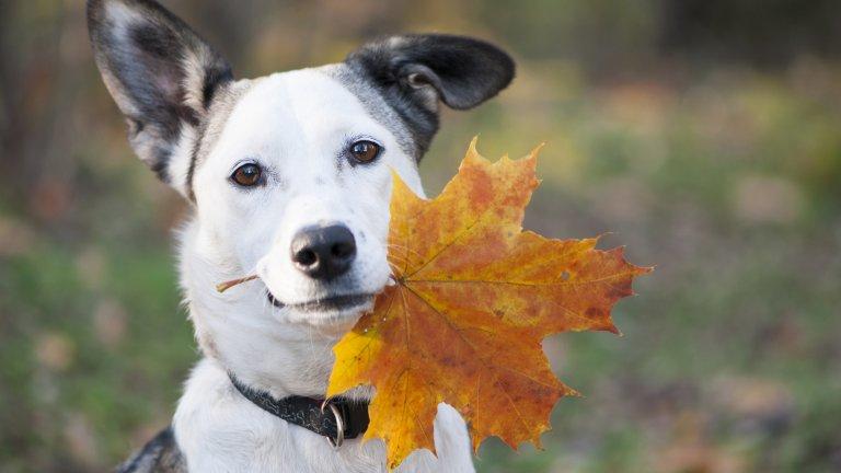 Есента е чудесно време за забавления с домашния любимец, но ето за какво да внимавате: