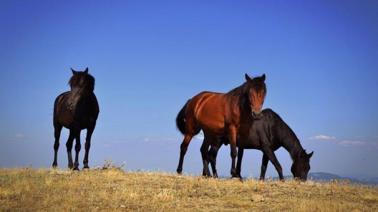 Благородните животни позволяват на хората да се приближат до тях, но когато границата е прекрачена дават знак с пръхтене и тропане с копита