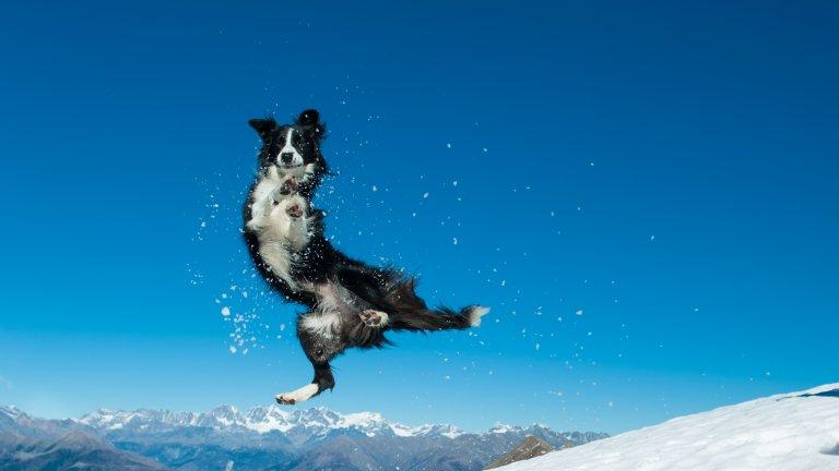 Мит номер 5: Кучетата не могат да хванат бълхи и кърлежи през зиматаНе просто могат, а го и правят. Докато студът убива много от вредителите, които ни тормозят през лятото, бълхите и кърлежите са особено устойчиви и през зимата търсят топло място, на което да се скрият. Продължавайте да давате обезпаразитяващи таблетки на кучето си и през зимата и ако забележите, че се чеше много, проверете козината му за бълхи и кърлежи.