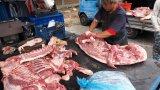 СЗО: Спрете продажбата на живи диви бозайници