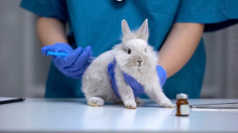 Ваксините предпазват вашия заек, куче или коте от някои много опасни инфекциозни болести