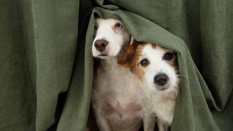 Погрижете се за кучето по време на буряИ преди сме го казвали, но ще повторим - изключително важно е да се погрижите за домашните си любимци (кучета и котки), ако ги е страх от бури, гръмотевици и фойерверки. Направете всичко възможно животното да премине максимално спокойно през това изпитание за нервите му и след това го наградете с някое любимо лакомство.