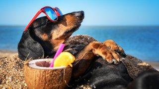 8 съвета за опазване на кучето по време на жега