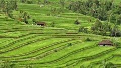 Вижте още снимки от Индонезия в галерията