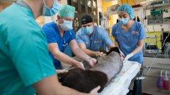 Български лекари спасиха куче-водач с уникална операция