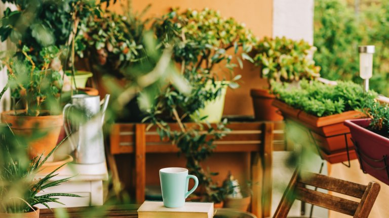 Озеленете обстановкатаТрудно е да се даде един общ съвет за това как да преврърнете балкона си в градина, но първо помислете по следните въпроси: цъфтящи ли си представяте растенията, или по-скоро храсти или цветя с по-дебели стебла и в по-тъмни нюанси на зеленото? А какво ще кажете за билкова градина?  Първото, което трябва да направите, след като си отговорите, е да определите с какво изложение е терасата ви. Ако е северно, подберете растения, които обичат сянката - бръшлян, теменужки или доброто старо мушкато например. Ако пък е южна, можете спокойно да сложите кашпи с петунии, каскадна бегония или хибискус. На слънчевата западна тераса пък ще оцелеят агератумът, калдаръмчето, бугневилията, пасифлората, както и всякакви видове кактуси. Изтока пък предпочитат лобелията, хортензията и калуната. Винаги обаче е добре да импровизирате и сами да усетите как се чувстват растенията.