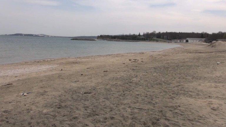 Телата на два мъртви делфина са били открити на плаж край Созопол