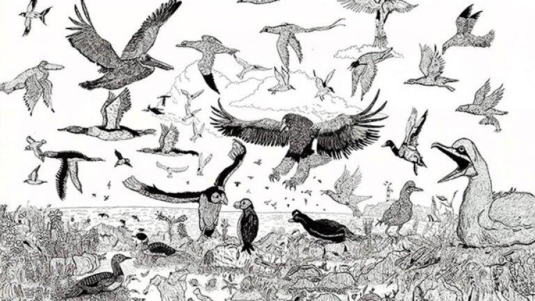 Различни видове птици