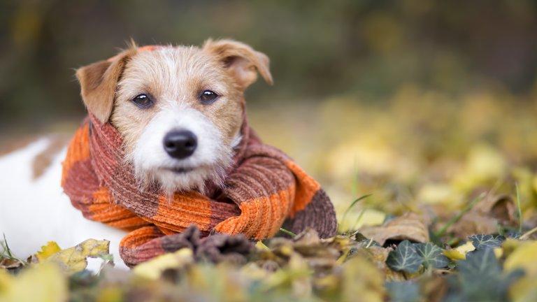 Намалете времето за разходкиНе е необходимо навън да е под нулата, за да му е студено на вашия любимец и да се простуди. Кучето ви няма как да ви каже, че температурата е некомфортно ниска за него, затова в по-хладните месеци ограничете разходките, особено ако четириногият е още малък или пък е твърде възрастен.