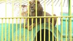 Лицензът на зоокъта не е подновяван от три години насам