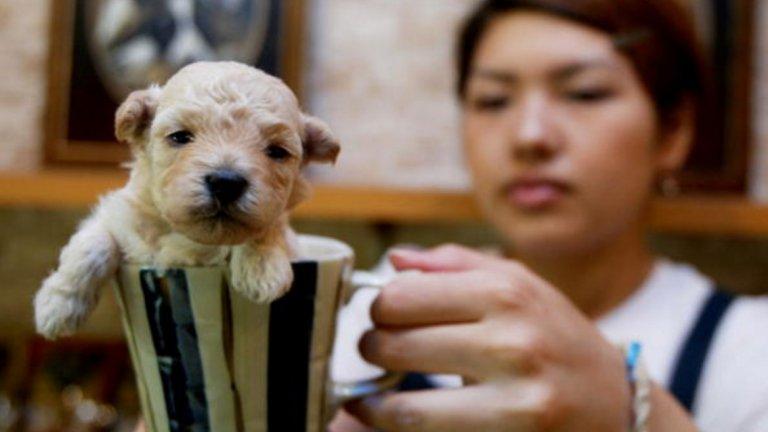 Активисти и защитници на правата на животните по целия свят се обявяват срещу продажбата на животни в зоомагазини