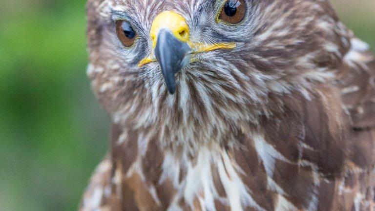 Огромната част от затворените обитатели на външните, а и на вътрешните клетки (в които човешкото присъствие е ограничено до минимум) са защитени видове хищни птици.