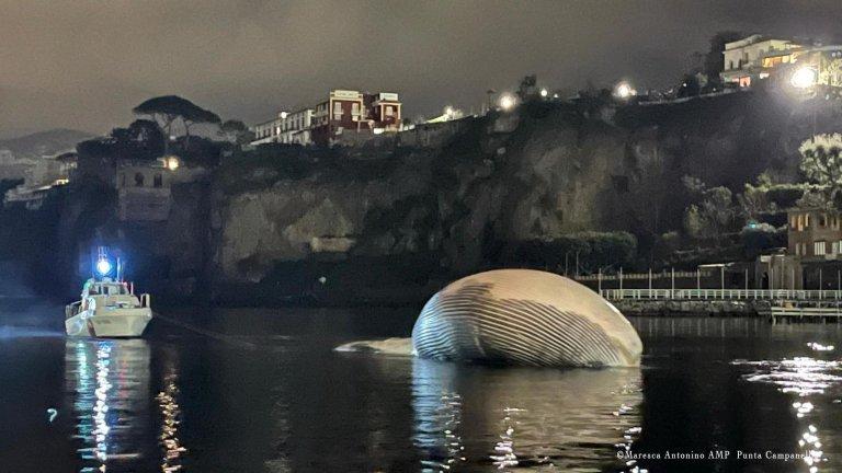 Тялото на огромен кит изплува край Южна Италия (снимки)