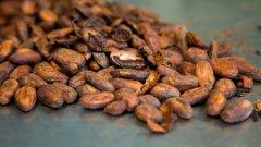 Знаете ли кой е първият шоколадов продукт, който е изцяло придобит от устойчиво земеделие?