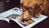 Любимите животни стават все по-важна част от живота