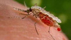 """Продукцията с марка """"Франкенщайн"""" понякога е от полза на човечеството - като ГМО комар срещу маларията например"""