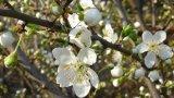 20 март - денят на пролетното равноденствие