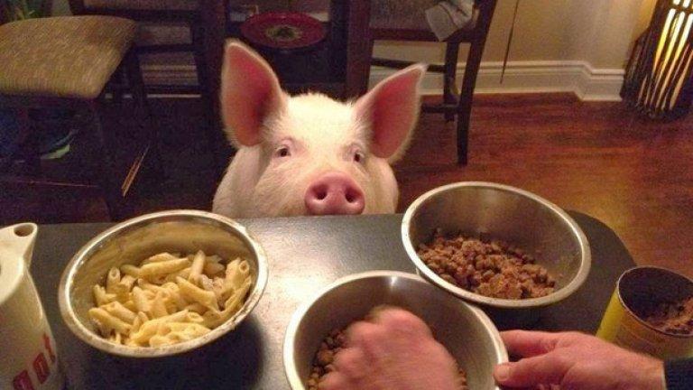 Естествено, обича да яде по много...