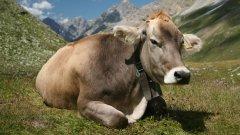 Няма нужда да ставаме зорлен вегетарианци, за да спасим планетата от затопляне...