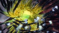 Музейна Галерия за Модерно Изкуство представи 40 нови фотоса, заснети през последните две години в Тихия и Индийския океан; Червено, Черно и Средиземно море от майстора на подводната художествена фотография Михаил Заимов.