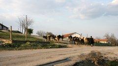 Ако селата ни се понапълнят с чуждестранни заселници, ще се случи цивилизационна колонизация...