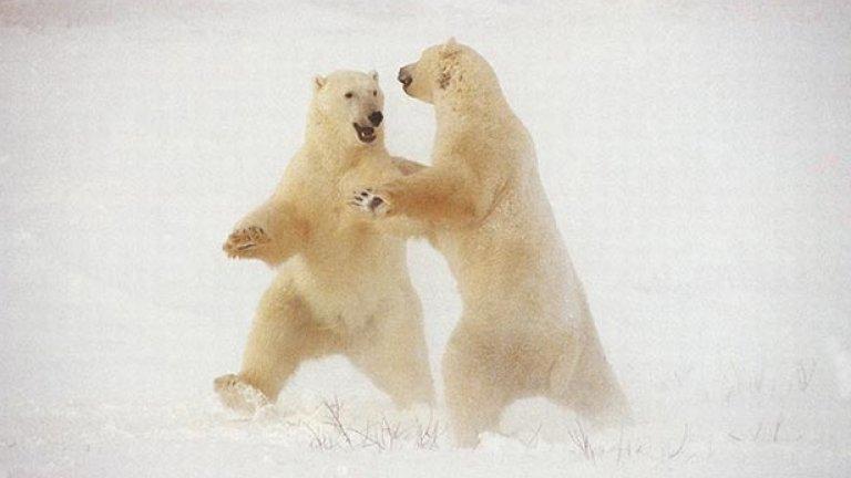Някогашните господари на Арктика