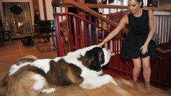 Ким Кардашиян и семейството й неведнъж са декларирали любовта си към животните, въпреки че по-голямата част от фамилията очевидно не може да се грижи за тях. На снимката Ким гали куче в магазин в Париж.
