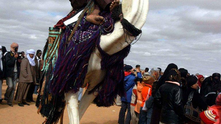 Туарегът Абас е горд със своето махари, както местните наричат ездитните камили. Той е спечелил годишното състезание, което му носи награда от 5000 долара.