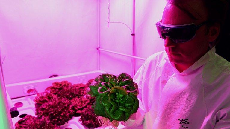 Физиката и химията на готвенето и селското стопанство ще се сринат на червената планета