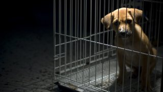 Вярвате или не, експлоатацията на животни е третият по мащаби криминален бизнес в Европа. И той тепърва ще се разраства